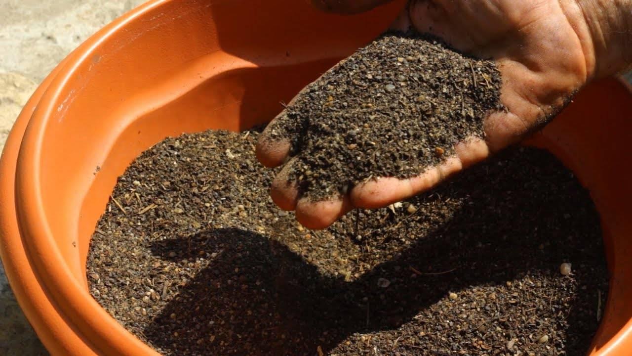 Как вырастить фикус бенджамина в домашних условиях из семян или отростка   вокруг нас