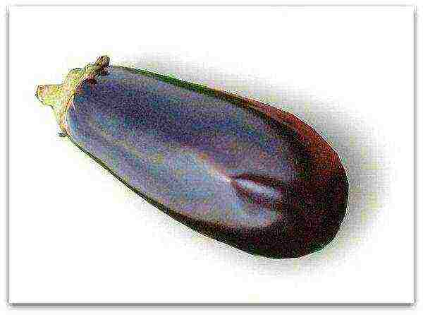 "Баклажан ""клоринда"": описание сорта, отзывы, фото"