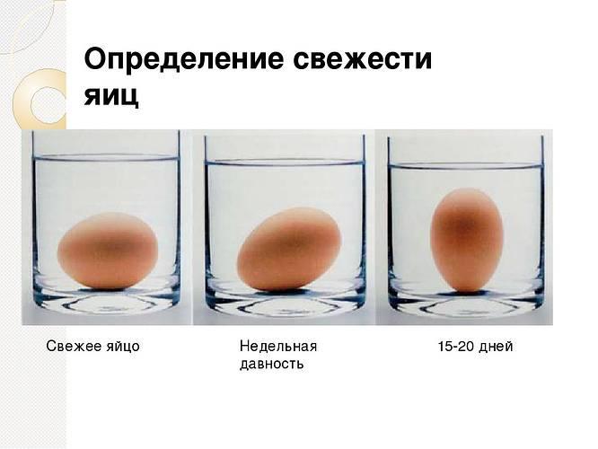 Как хранить инкубационные яйца до закладки в инкубатор, требования к помещению и сроки