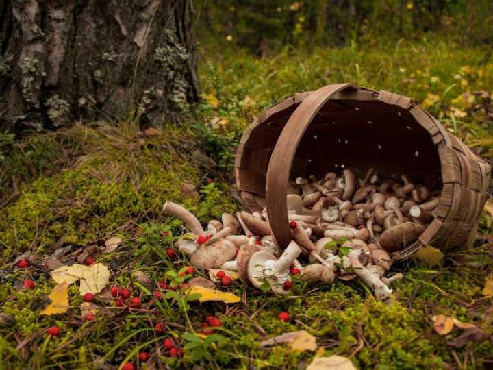 Как правильно искать и собирать грибы в лесу - 7 народных примет
