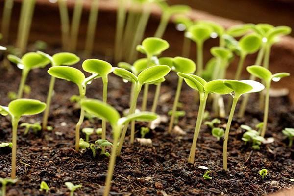 Стимуляторы роста для растений