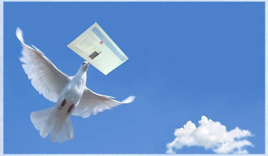 Как работает голубиная почта: описание