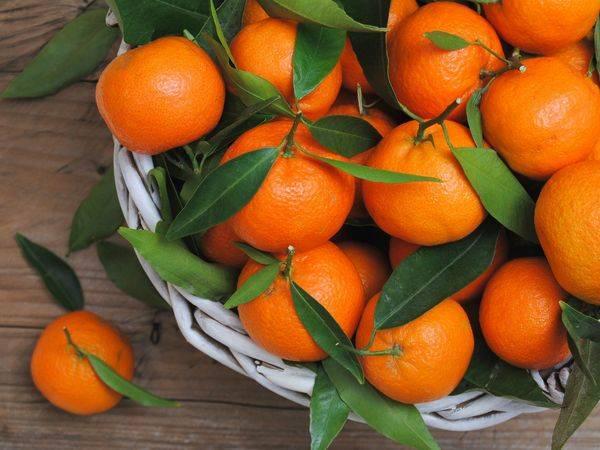 Кровавый апельсин: как называется красный апельсин и почему его мякоть красная внутри, где растут такие фрукты и какие они на вкус