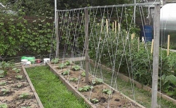 Огурцы на шпалере в открытом грунте: особенности и правила выращивания