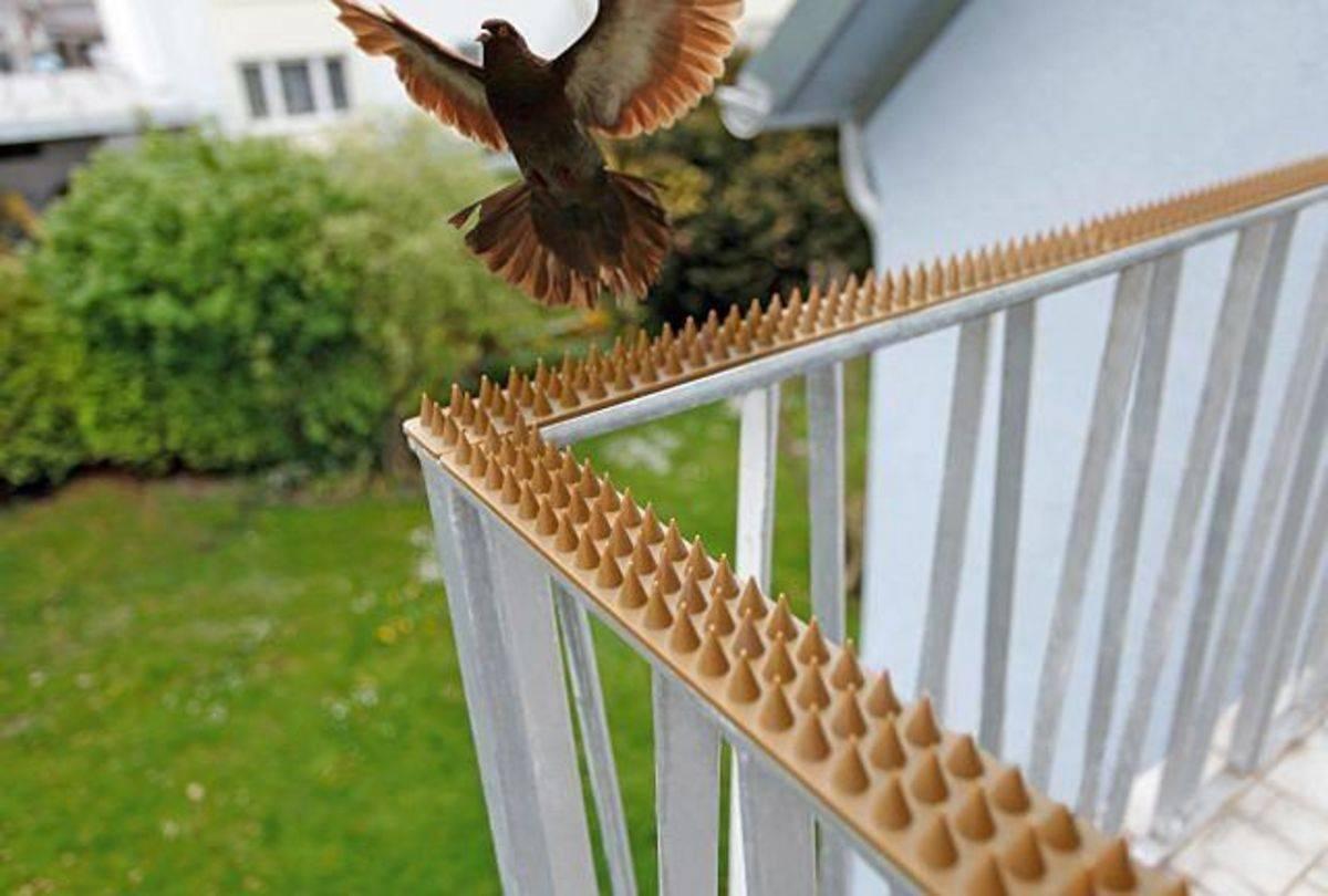 Как быстро избавиться от голубей на балконе