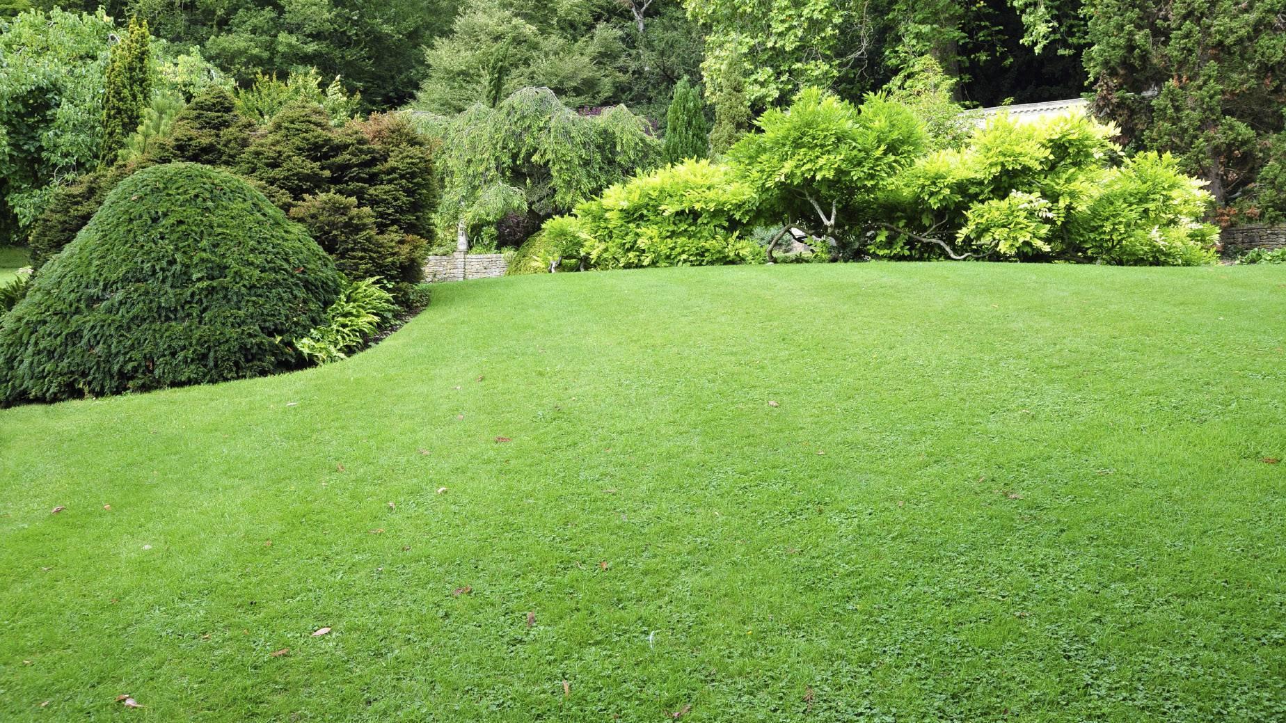 Газонная трава: способы посадки газона