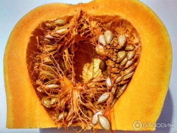 11 лучших сортов тыквы