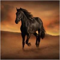 Сонник лошадь. к чему снится лошадь во сне?