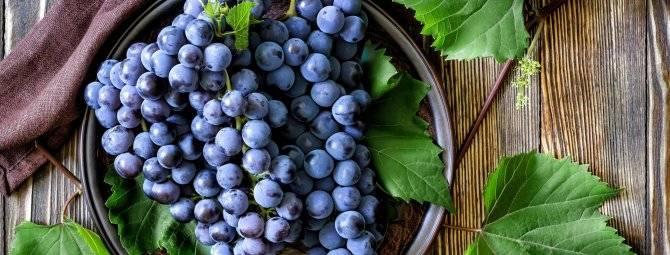ᐉ портос* - виноград - roza-zanoza.ru