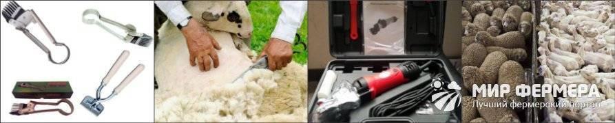 Ножницы для стрижки баранов: какие бывают и как выбрать