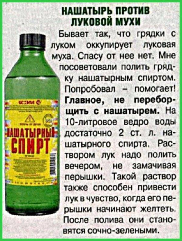 Нашатырный спирт: безопасная азотная подкормка для растений и средство борьбы с вредителями