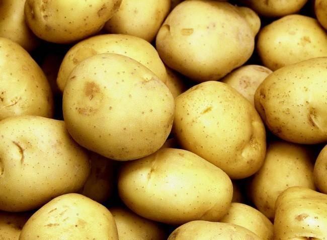 Картофель лига — характеристика сорта с превосходными вкусовыми качествами