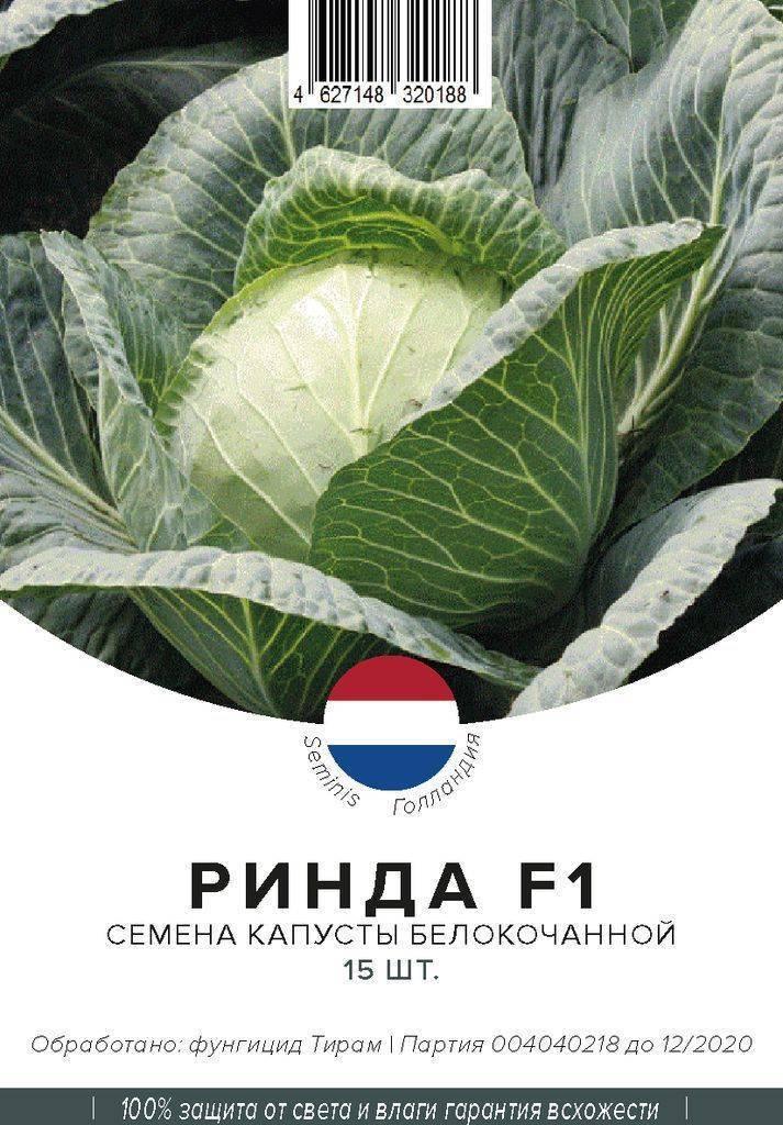 Особенности урожайного гибрида капусты ринда