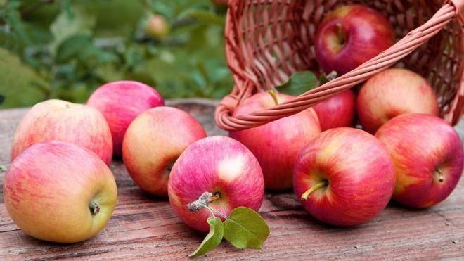 Яблоня аркадик: описание сорта, правила выращивания и советы по уходу, отзывы