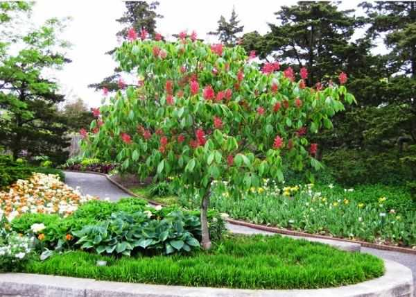 Выбираем декоративные деревья для сада