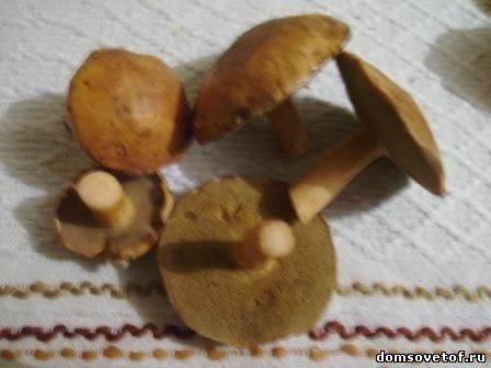 Какие грибы можно есть сырыми. какие грибы сырыми едят.   здоровое питание
