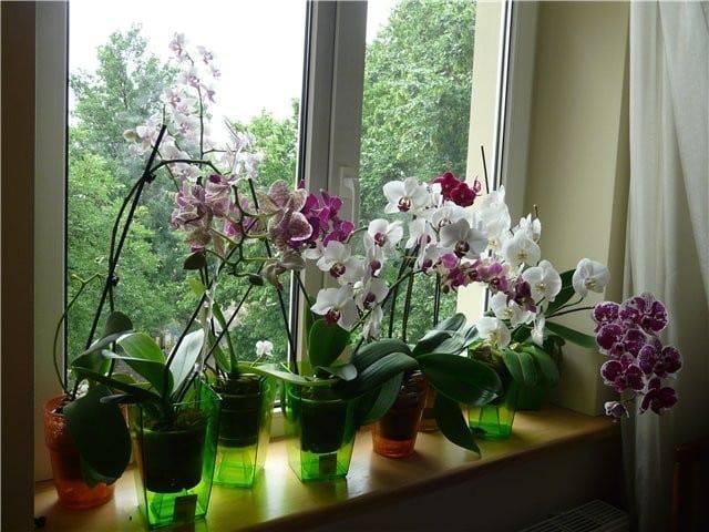 Инструкция, как поливать орхидею зимой
