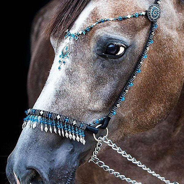 Какой должна быть уздечка для лошади?