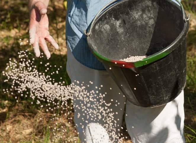 Карбамид (мочевина): используем для разных культур | огородники