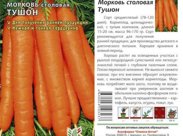 Описание моркови сорта тушон - мыдачники