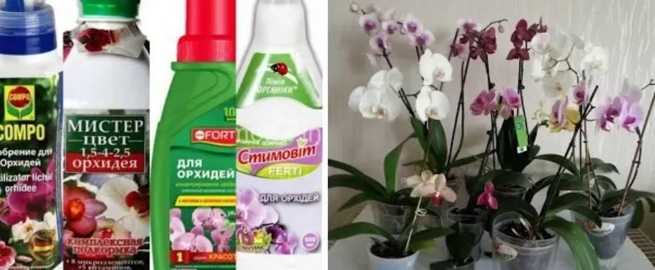 Удобрение для орхидей: подкормка цветов в домашних условиях