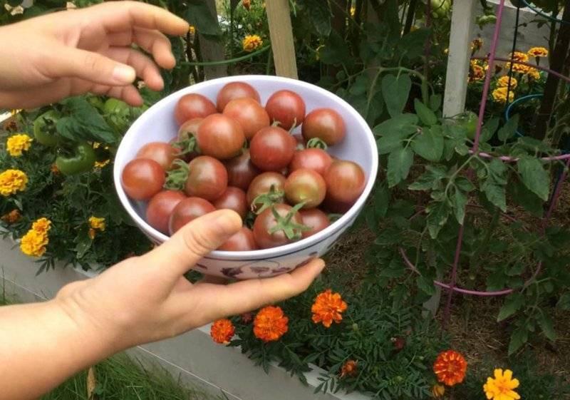 10 лучших сортов томатов черри