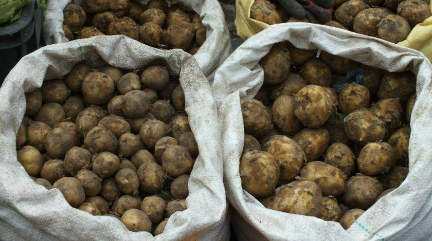 Почему у картофеля может быть высокая ботва?