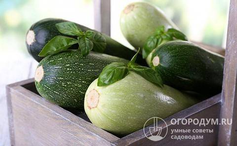 Как сохранить кабачки и тыкву на зиму в домашних условиях? в квартире, до весны, свежими. — ботаничка.ru
