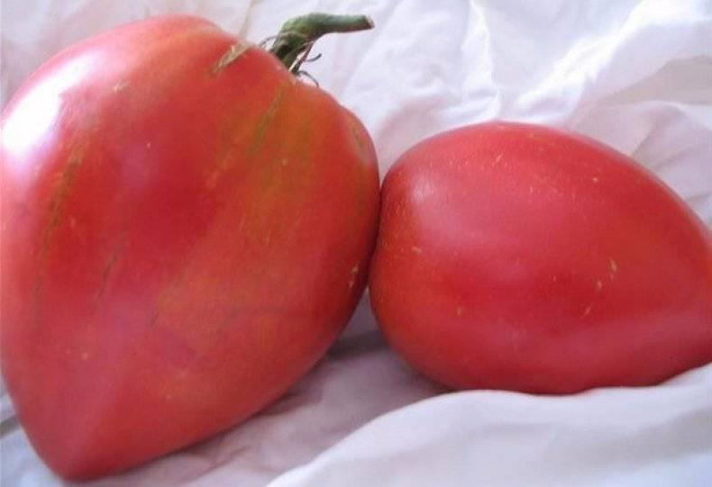 Как выбрать низкорослые помидоры для теплиц: детальная инструкция