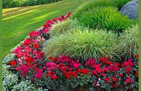 Растения для альпийской горки: виды особенности, критерии выбора цветов для алпинария, правила ухода за растениями