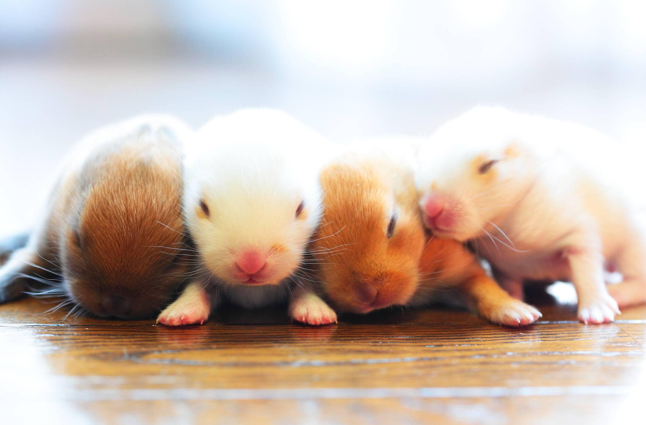 Декоративные кролики, уход и кормление как залог здоровья