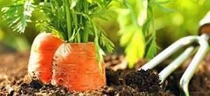 Как сделать семена на ленте своими руками быстро и просто