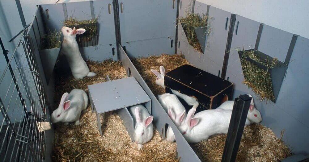 Бизнес на разведении кроликов — выгоден ли и как его спланировать