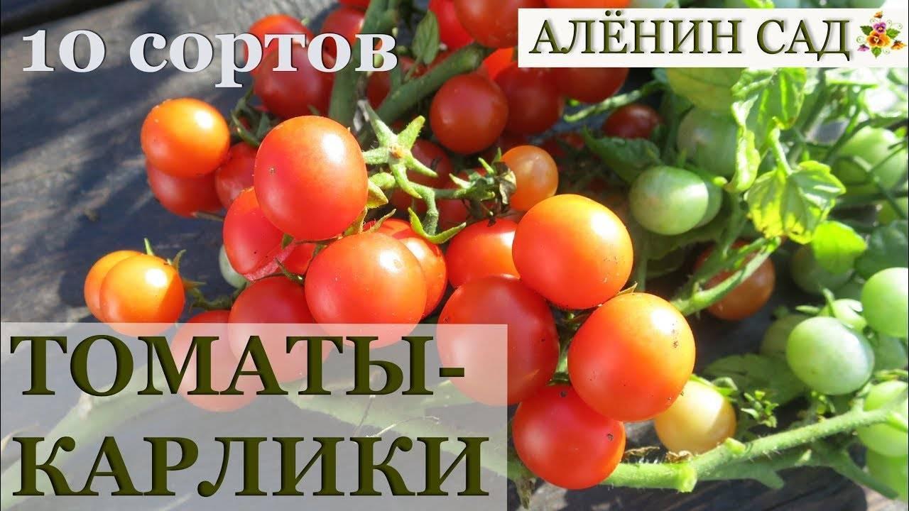 Сорта и гибриды низкорослых томатов, или помидоры для ленивых. томаты-карлики, ампельные, стелющиеся. фото — ботаничка.ru