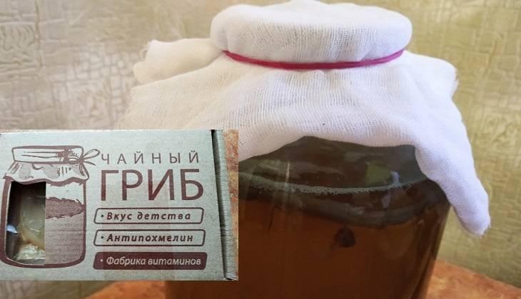 Как вырастить чайный гриб - 105 фото и видео описание технологии выращивания
