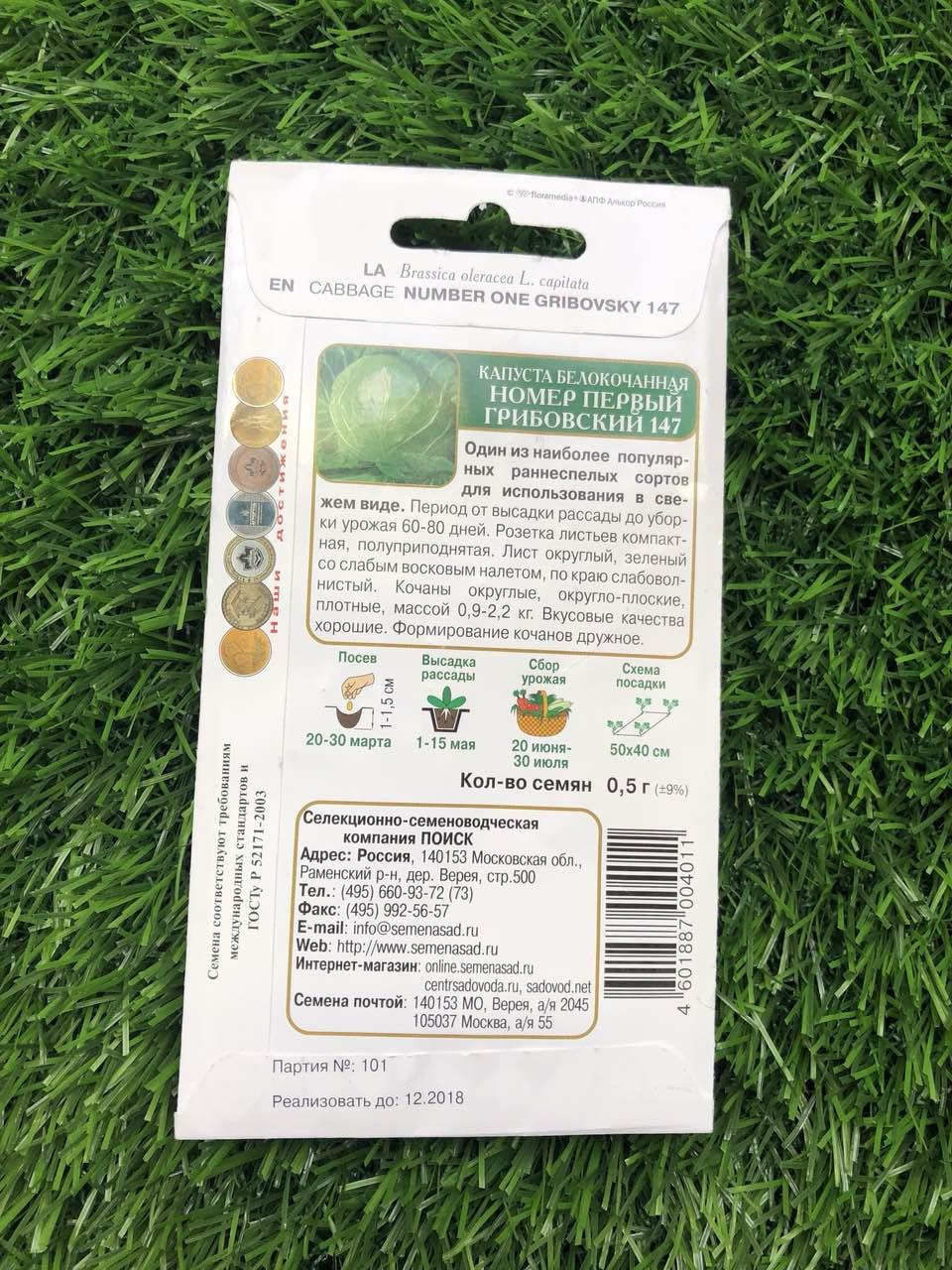 Описание капусты сорта грибовская