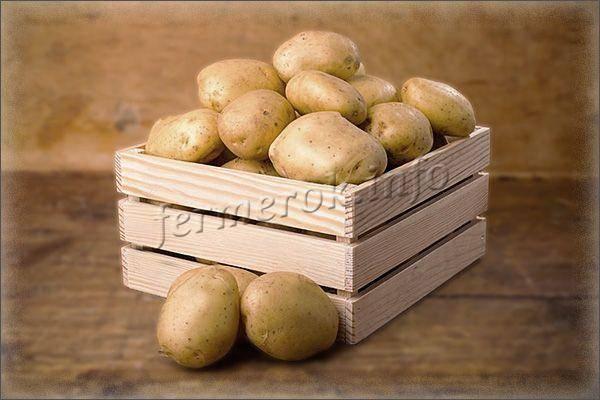 Картофель «наташа» от германского производителя solana