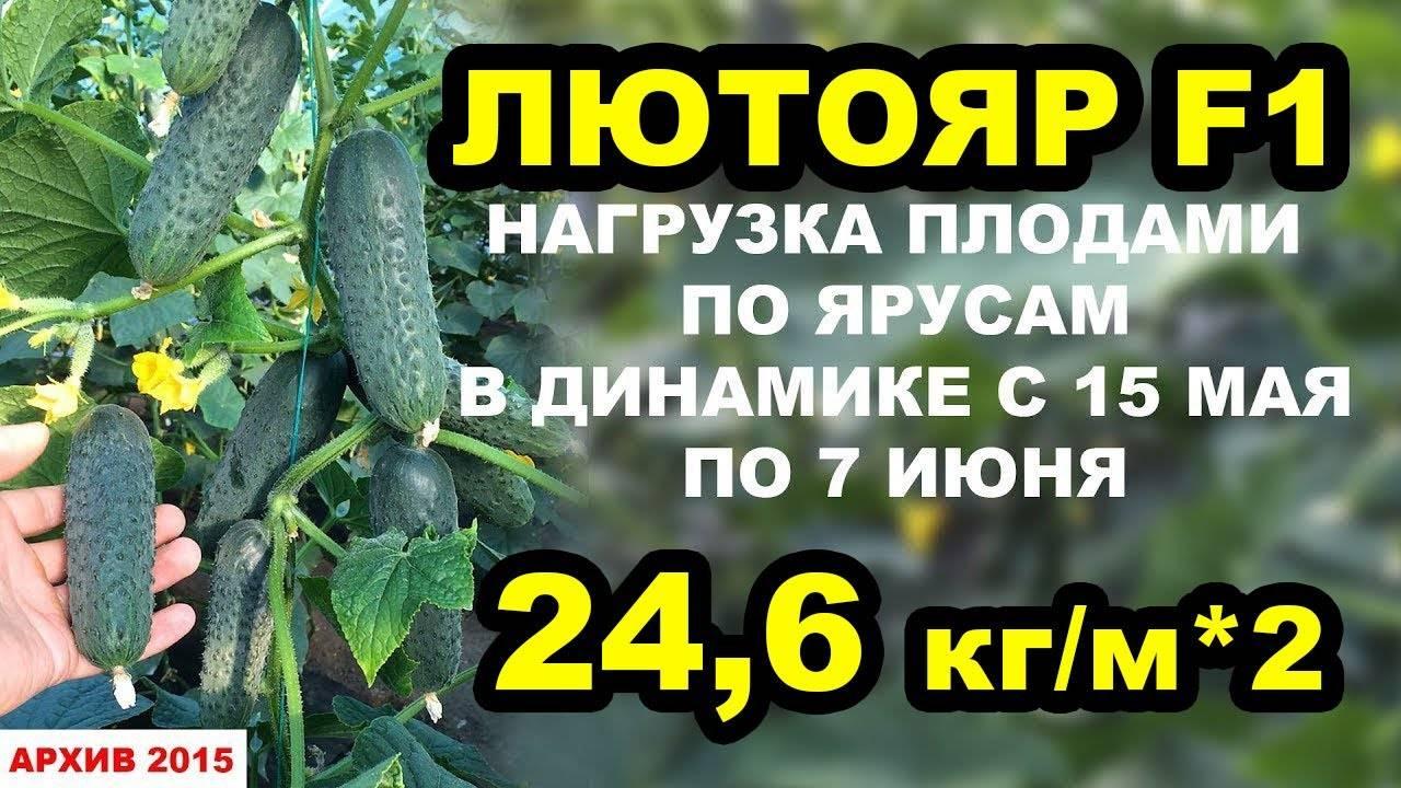 Об огурце лютояр: описание сорта, характеристики, технология выращивания