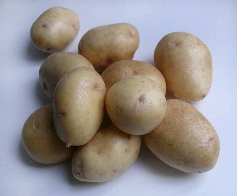 Картофель джелли: описание сорта и характеристика с фото, вкусовые качества, особенности выращивания и ухода