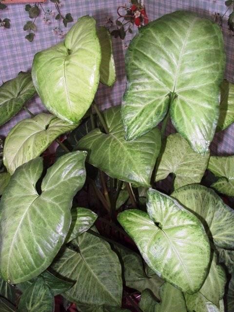 Большие комнатные растения для дома — названия с фото, особенности ухода