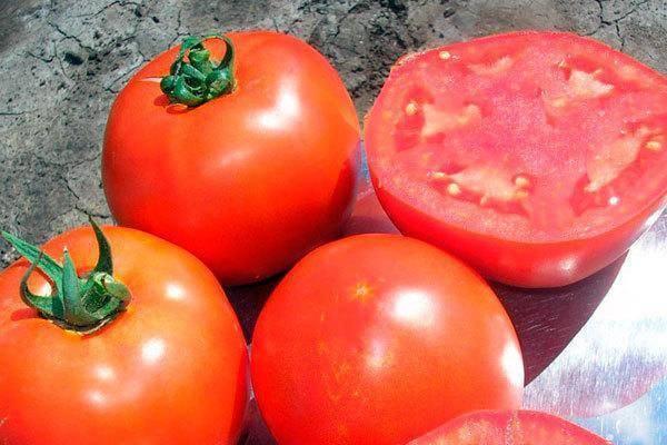 Характеристика и описание томата «багира». томат багира f1: рекомендации по выращиванию и отзывы о сорте
