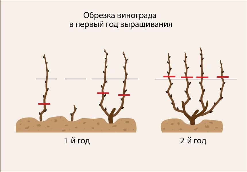 Обрезка плодовых деревьев весной – советы для начинающих и не только - огород, сад, балкон - медиаплатформа миртесен