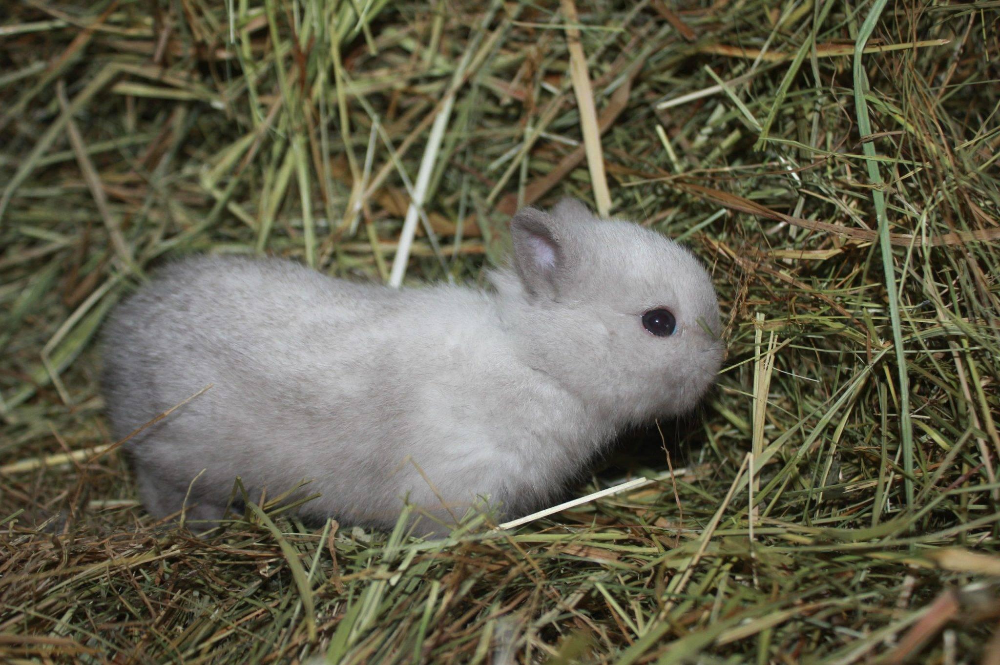 Сколько лет живут декоративные кролики?
