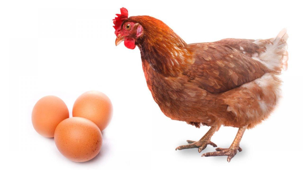 Сколько весит яйцо: мерная таблица куриных яиц по категориям