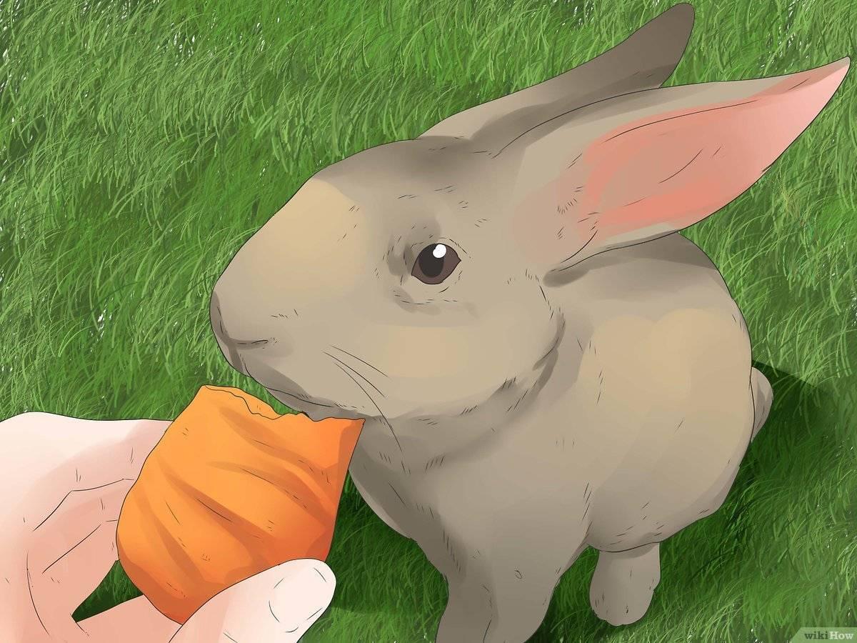 Почему декоративные кролики кусаются и как их отучить: советы с видео почему декоративные кролики кусаются и как их отучить: советы с видео