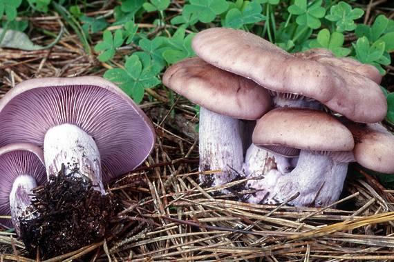 Весенние грибы 2020 фото: съедобные, несъедобные и ядовитые