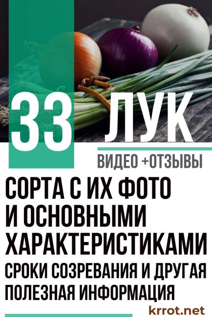 Лук «стригуновский»: описание сорта, фото и отзывы
