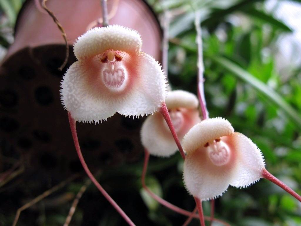 Необыкновенные крупноцветковые орхидеи: различные виды и сорта