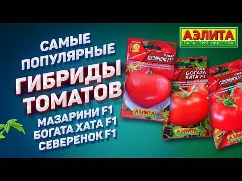 Истинные гурманы оценят помидоры «розовый клад f1»: описание и характеристика сорта