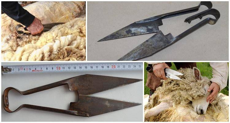 Овечьи ножницы для стрижки баранов: старинные для овец - как стригут и стриженная